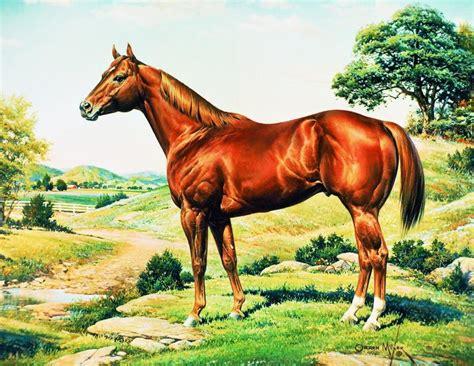 quarter horse american aqha painting favourite mixer credit edit