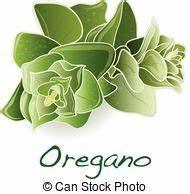 Oregano Illustrations and Clipart. 647 Oregano royalty ...