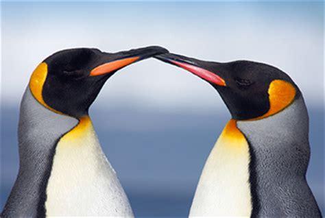 penguin awareness day jan