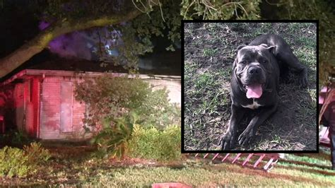 womans dad   face flames  save familys dog