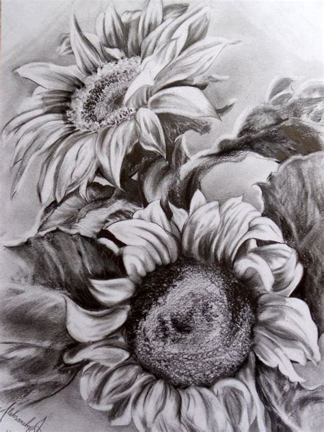 sunflower pencil drawing httplometscom