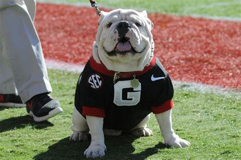 7 Things To Know About Uga