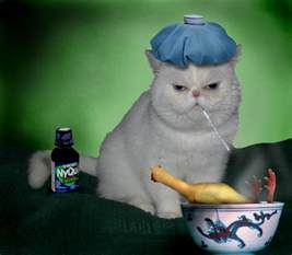 sick cat sick cat blank template imgflip
