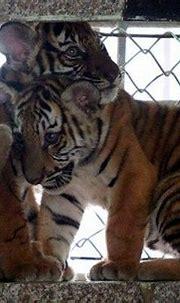Hanoi Zoo - The Week in Pictures - 24 June 2011 | Animals ...