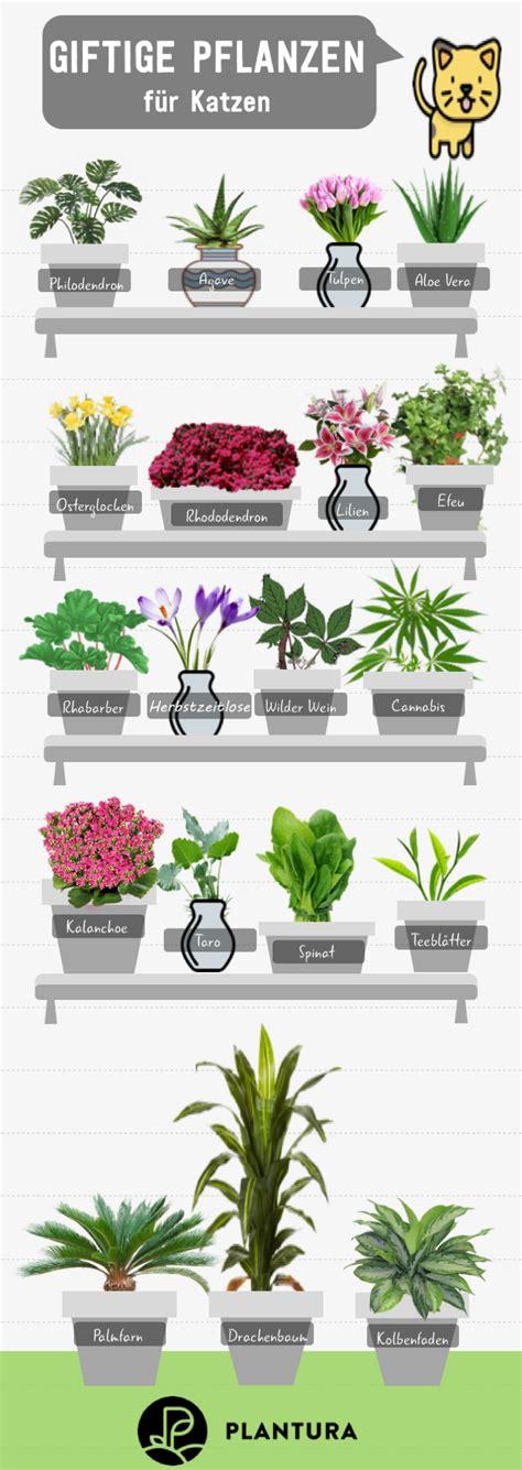 Giftige Zimmerpflanzen Für Katzen by 10 Giftige Zimmerpflanzen F 252 R Haustiere Different