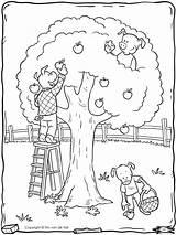 Tree Apple Coloring Three Pigs Tim Navigation sketch template
