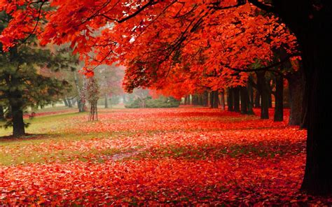 Wallpaper Natural, Park, Autumn, Red Leaves, Autumn