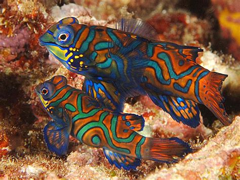 brightly colored fish top 10 most beautiful and colorful fish