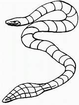 Snake Coloring Sea Garter Printable Drawing Template Clipartmag Sketch Popular sketch template