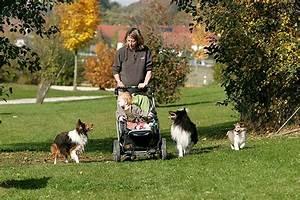 Mietwohnung Mit Hund : hund und baby das sollten sie beachten ~ Lizthompson.info Haus und Dekorationen