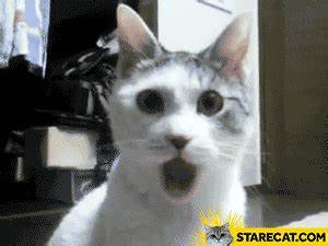 Shocked cat GIF animation | StareCat.com