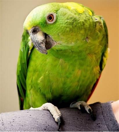 Pet Pets Exotic Birds Yellow Oregonlive Oregon
