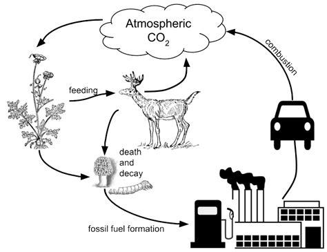 carbon cycle model