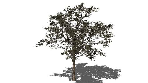 arvore 2 3d warehouse sketchup pinterest trees