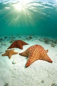 1035 Best Shells  Starfish  Tropical Fish  Mermaids  And