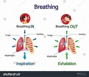Pictures That Show What Happens Lungs Stock Vector