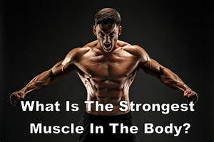 What Is The Strongest Muscle In The Body