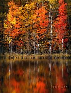 fall landscape art fall trees painting tree by lewfoster ...