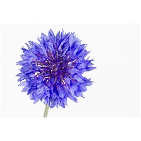 sticker mural fleur violette univers fleurs pour votre