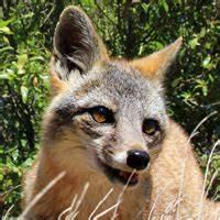 Island Conservation San Nicolas Island, California ...