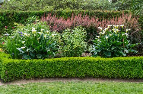 Calla Pflanzen » Ein Pflanzratgeber