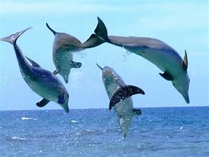 Drawings Of Dolphins Jumping Out Of Water