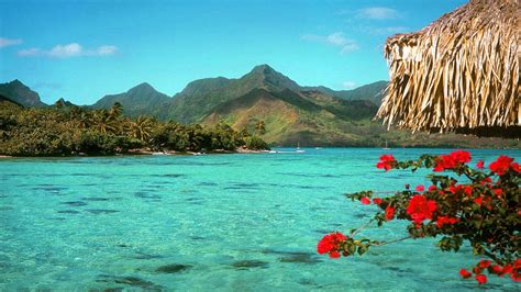 aqua desk desktop background tropical background tropical