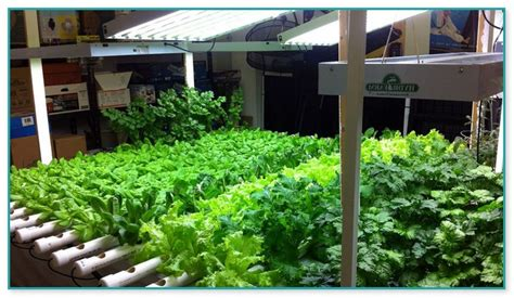 Hydroponic Water Filter Systems