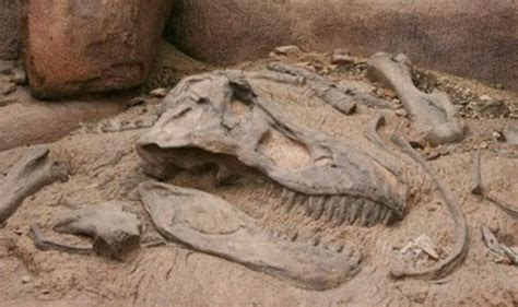 Baby Dinosaur Fossils Reveal