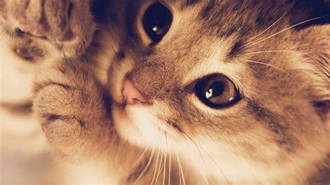 desktop wallpaper laptop mac macbook airmq cute cat