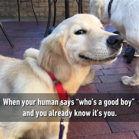 Good Boy Memes - good boy is my name memes comics pinterest boys memes and animal
