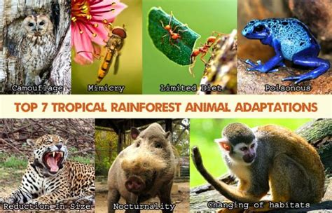 top  tropical rainforest animal adaptations biology