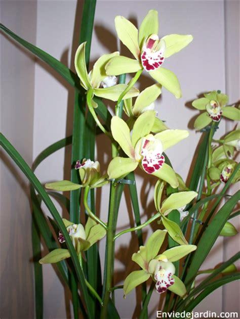 entretien de orchid 233 es photo de fleur une pensee fleuriste