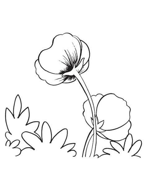 poppy flower coloring page color luna