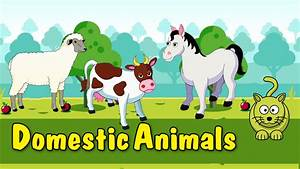 Animated Animals For Kids