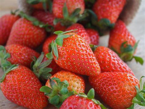 Darum Sind Erdbeeren Gesund  Das Erwachen Der Valkyrjar