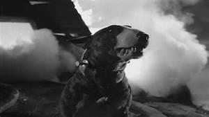 'Frankenweenie' (1984) - Frankenweenie Image (29574778 ...