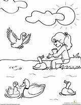 Ducks Feeding Worksheet Plants Animals Coloring Education Worksheets Science Kindergarten sketch template