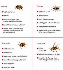 Gift Für Wespen : wespen bienen 7 tipps bei stichen ~ Whattoseeinmadrid.com Haus und Dekorationen
