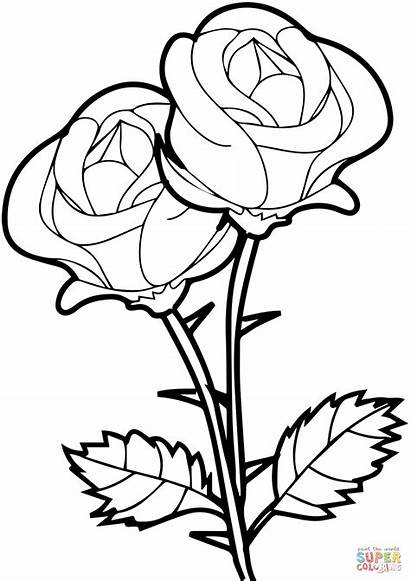 Coloring Pages Roses Printable Drawing Paper