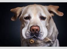 Hilarious Expressions Of Hungry Dogs As They Try To Catch