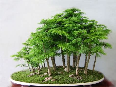 the 25 best bonsai forest ideas on bonsai