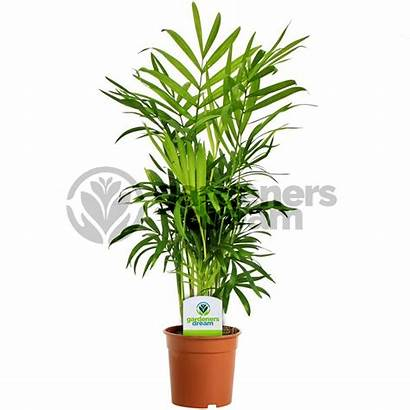 Plants Indoor Potted Plant Office Pot Tree
