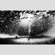 The Captivating Black And White Underwater Photography Of