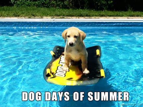 Summer Memes - 90 best summer memes