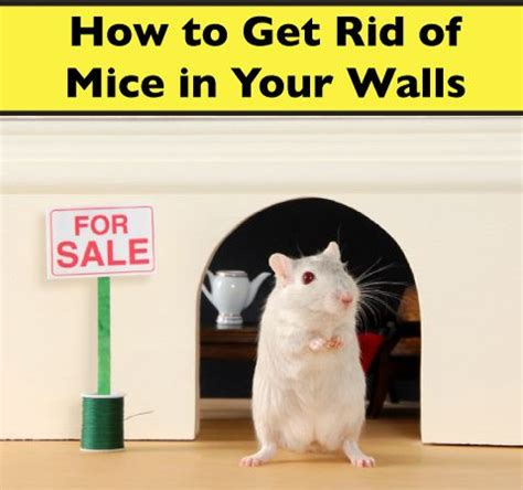 snap wood how to get rid of mice in walls victor