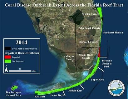 Coral Florida Disease Stony Reef Keys Reefs