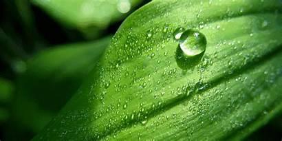 Superhydrophobic Natural Plants Nature Superoleophobic Leaf Hydrophobic