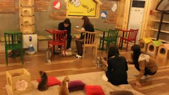 cat cafe crowd funded cat caf 233 s dontbeahayter