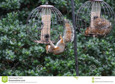 Excellent Squirrel Free Bird Feeder 110 Free Standing